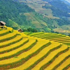 Ruong bac thang by Hong Huy Phuong - Landscapes Travel