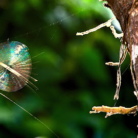by Cezar Pegoraro - Nature Up Close Webs