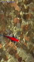 Screenshot of Red Koi Fish in Wishing Well