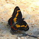 Eumeda Checkerspot butterfly