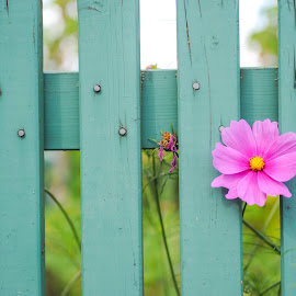 Hessen Fence by Bob Ricca - Nature Up Close Gardens & Produce (  )