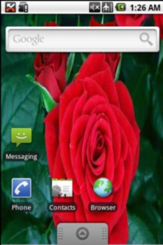 Red Blooming Rose