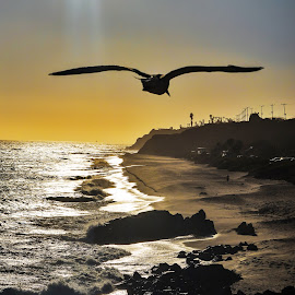 by Jeffrey Goodman - Landscapes Beaches