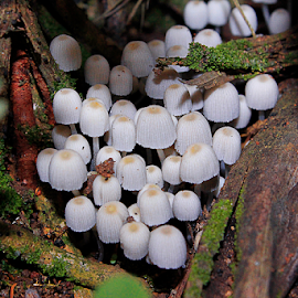 colony by Ronald Wahyudi - Nature Up Close Mushrooms & Fungi