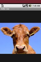 Screenshot of Hello Cow