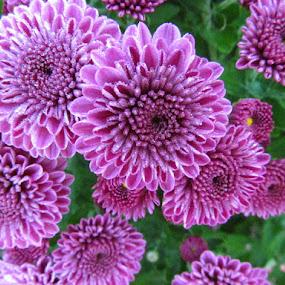 Purple glisten by Alan Hammond - Flowers Flowers in the Wild ( purple, flowers,  )