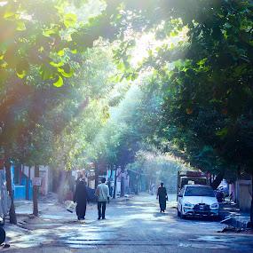 Light by Vinod Velayudhan - City,  Street & Park  Neighborhoods ( street, volumetric lighting, morning )