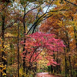 Joe Bald Park by Jackie Stoner - City,  Street & Park  Neighborhoods ( pathway, yellows, pinks, autumn, leaf covered, trees, path, nature, landscape )