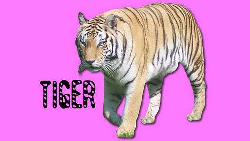 Toddler Animal Sounds - Roars