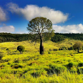 Outback in Australia by Tyrell Heaton - Nature Up Close Trees & Bushes ( outback in australia )