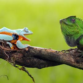 Laughing Frog by Andri Priyadi - Animals Amphibians ( macros, lizard, animals, macro photography, frog, nikkor, amphibian, chameleon, amphibians, nikon d90, reptiles, macro, indonesia, flying frog, frogs, reptile, nikon, animal )