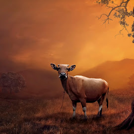 Sapi by Juprinaldi Photoart  - Digital Art Animals