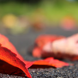 Coloring Falling All Around by Ashley McCuen - Nature Up Close Leaves & Grasses ( walking, macro, red, park, nature, ground level, leaves,  )