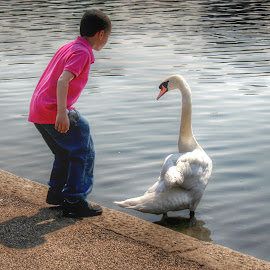 The Great Swan by Nachau Kirwan - City,  Street & Park  City Parks ( water, london, sunny, son, kids )