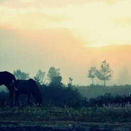 Wild Horses by Mude Angkasa - Animals Horses