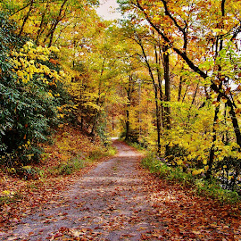 by Delores Mills - Landscapes Forests ( path, nature, landscape,  )