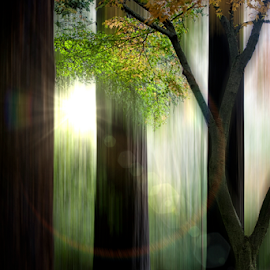 Fine Art Forest by Xavier Wiechers - Digital Art Places ( autum, fine art, path, vandusen garden, forest, motion, flare )