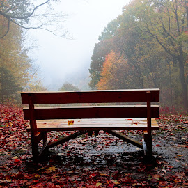 Bench in the Park by Jim Harmer - City,  Street & Park  City Parks (  )