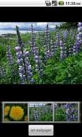 Screenshot of Alaska's Wild Flowers Pro