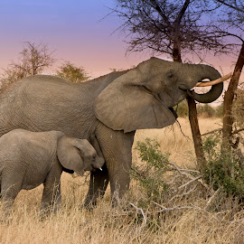 Mother and Baby Elephant by Deidre Elzer-Lento - Animals Other Mammals ( deidre elzer-lento, serengeti, elephant, photos by dee, safe harbor travel and photo inc., wildlife, tanzania, mammal, elephants, baby elephant, safari, plains, africa, Africa, Safari )