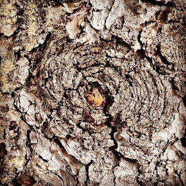 Pattern In Bark 🌲 by DeeDee Miller - Nature Up Close Trees & Bushes (  )