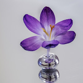Dancing flower by Fernanda Magalhaes - Flowers Single Flower ( nature, flores, crocus, close up, flower )