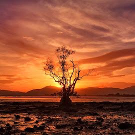 by Charliemagne Unggay - Landscapes Sunsets & Sunrises ( golden hour, sunset, sunrise, #GARYFONGDRAMATICLIGHT, #WTFBOBDAVIS )
