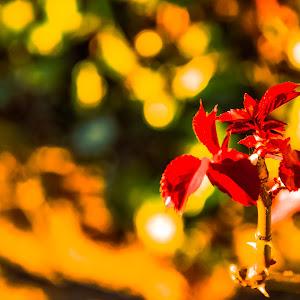 folhas.jpg