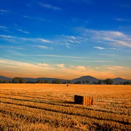 Alpacas cuadradas by Eduardo Menendez Mejia - Landscapes Prairies, Meadows & Fields ( españa, tokina 12-24, madrid, segovia, alpacas, atardecer, eduardo, nikon, d5100, menéndez, spain )