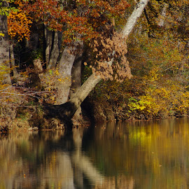 Reflection by Buddy Boyd - Landscapes Waterscapes ( water, reflection, silver, fall, gold,  )