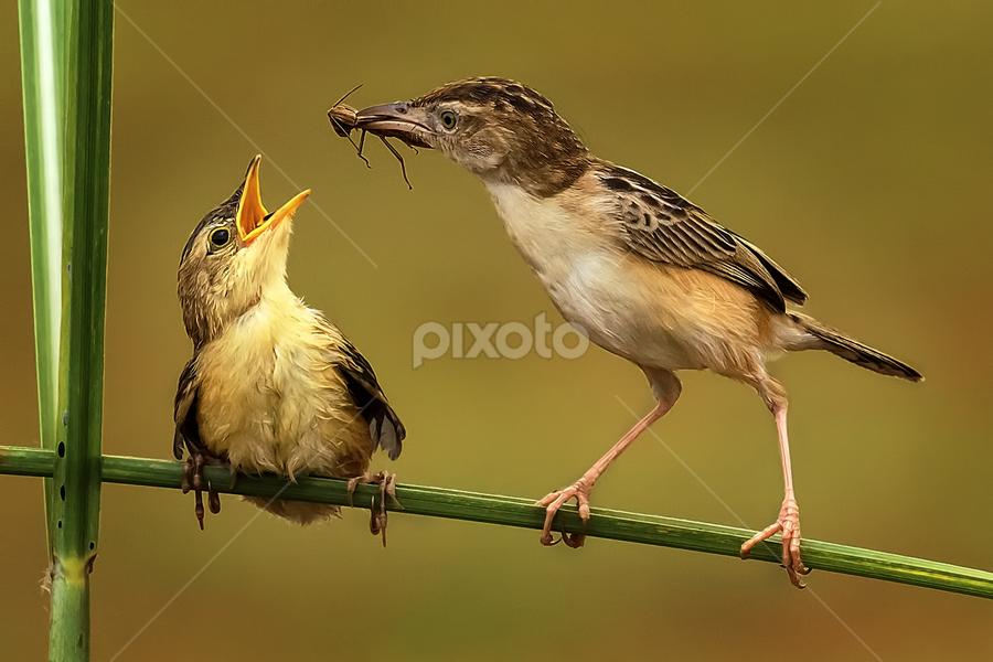 Lunch Time by MazLoy Husada - Animals Birds