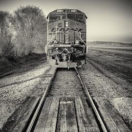 BNSF at crossing by Jonathan Abrams - Transportation Trains ( bnsf, black and white, locomotive, train, tracks )