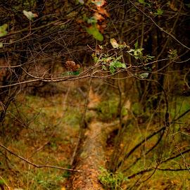 Tree 2 by Wojciech Cricetulus Migratorius - Nature Up Close Trees & Bushes