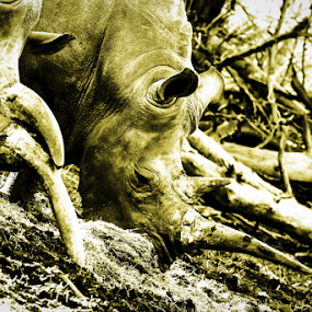 Rhino by Libin Michael - Animals Other Mammals ( mammals, animals, woods )