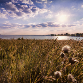 September Afternoon by Nancy Brizendine - Landscapes Prairies, Meadows & Fields ( shore, grasses, clouds, field, missouri, sky, smithville lake, trees, lake, sun, september )