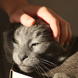 pets by Nick Dziewulski - Animals - Cats Portraits ( cat hand pet whiskers face )