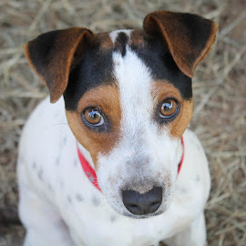 The face of a homeless pet by Cara Thomas - Animals - Dogs Portraits ( #love, #adoptdontshop, #jrt, #rescued, #sad )