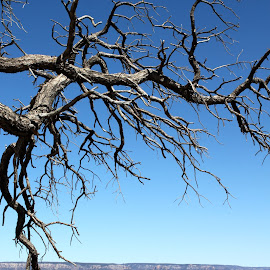 Bare Tree Overlook by Emma Kuster - Nature Up Close Trees & Bushes