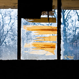 Window by Alex Rift - Abstract Patterns ( orange, window, blue, silhouette, forest, tape )