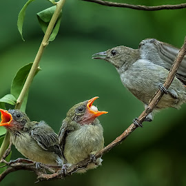 Mama...we need more food by MazLoy Husada - Animals Birds