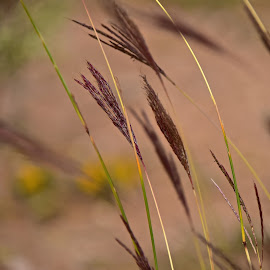 by Steven Aicinena - Nature Up Close Leaves & Grasses ( grass,  )