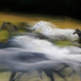 pass true by Milan Malovrh - Animals Horses