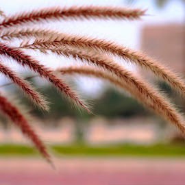 by Eliezer  ''Dong'' Quilang - Nature Up Close Leaves & Grasses (  )