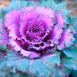 by MaryAnn Sei - Nature Up Close Gardens & Produce ( winter flower, purple, novice, green, other plants, garden, flower,  )
