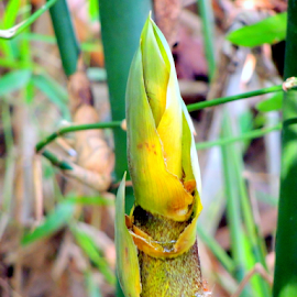Bamboo shoot by Yusop Sulaiman - Nature Up Close Other plants