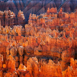 Inside Bryce at Sunset by David Kiel - Landscapes Mountains & Hills ( desert, utah, sunset, ourlandphoto.com, bryce canyon )