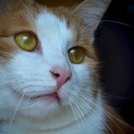 kiki by Almasa Dalan - Animals - Cats Portraits