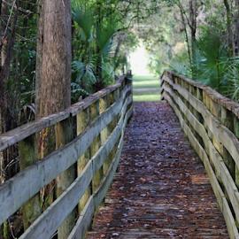 Through the cypress swamp by Priscilla Renda McDaniel - Buildings & Architecture Bridges & Suspended Structures ( no sun, depth of field, cypress swamp, wet, leaves, boardwalk )