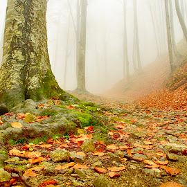 fog by Costin Mugurel - Nature Up Close Trees & Bushes ( mountains, fog, trees, forest, leaves )