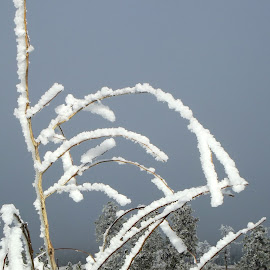 Frozen by Vicki Strickland - Novices Only Landscapes ( deadwood hill, black hills sd, crystalized, frozen, branches )